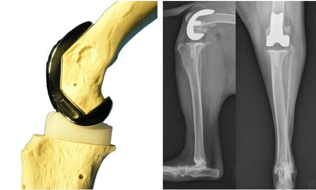 Desvios e deformidades ósseas e articulares em crianças com paralisia cerebral 7