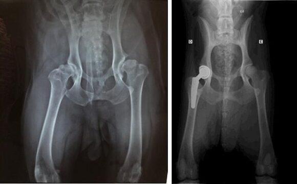 Displasia Coxofemoral
